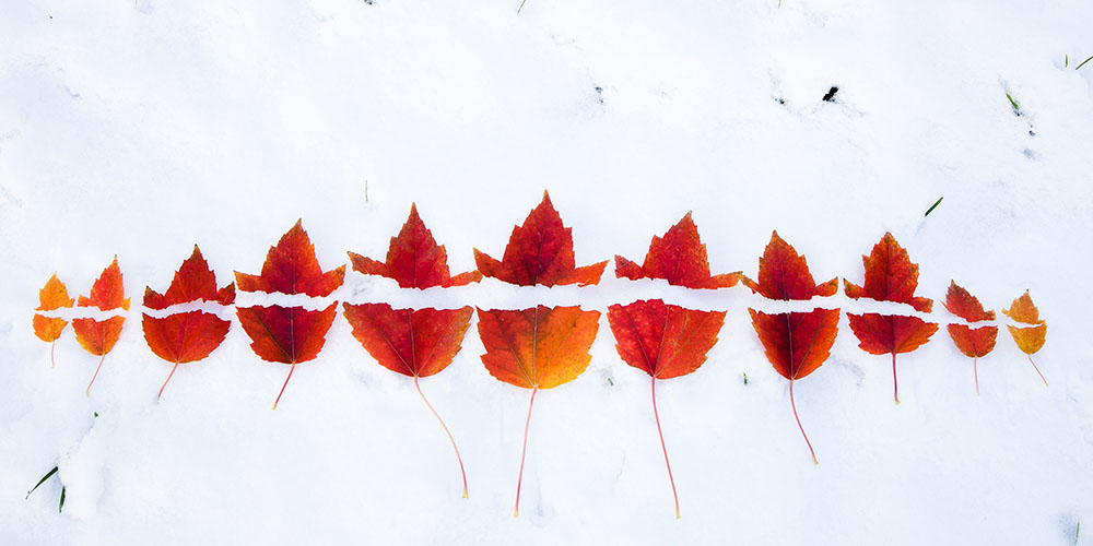 A row of eleven red leaves evenly torn in half down the middle